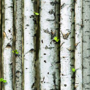 Giấy dán tường Natural 87009-2